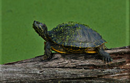 cropped-cooter-2.png