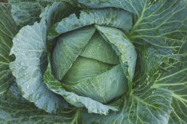 bright-cabbage-color-134877