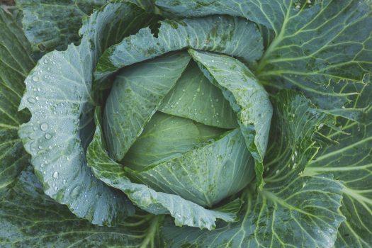 bright-cabbage-color-134877