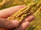 agriculture-blur-close-up-164504