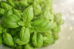 basil-blur-close-up-1391505